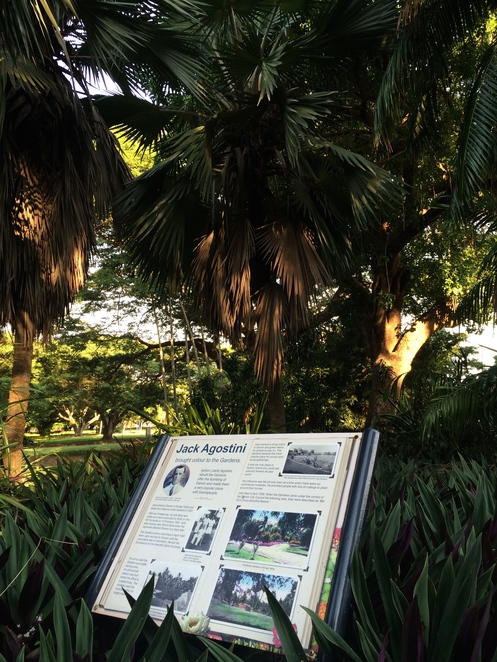Stories among the fan palms