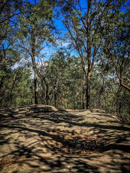 Toohey Forest, Griffith University, Bushwalking, Brisbane City, Things to do in Brisbane