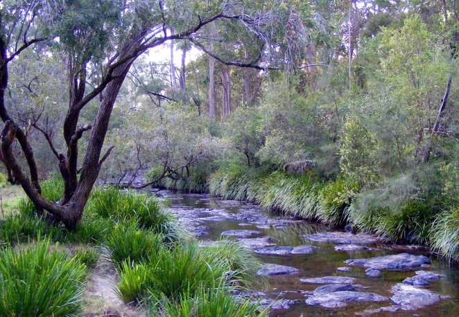 There is a nice walking path along Tooloom Creek between the 2 camp grounds