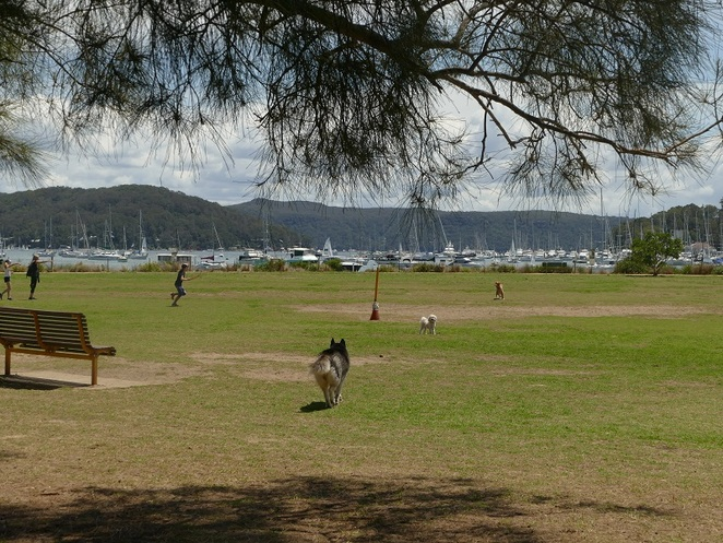 unleashed dog park Rowland Bayview Reserve, Pittwater, Northern beaches, Sydney NSW