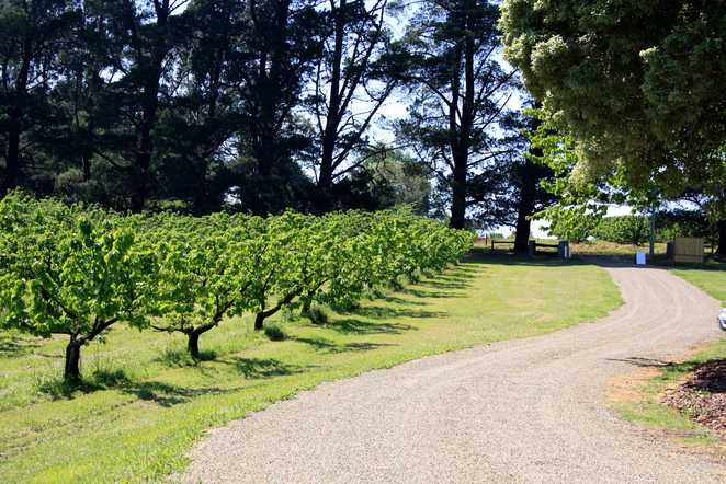U-Pick Cherry Farm - Yarra Valley
