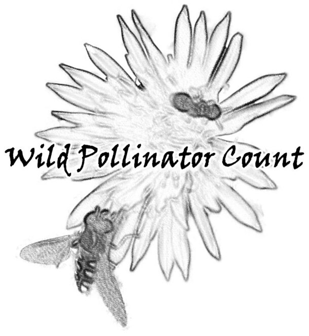 wild pollinator count 2020, counting insects 2020, community event, fun tings to do, citizen scientist, research insect species, native bee species, wild pollinator insect conservation australia, wild pollinator count, family fun, fun for kids, flowering plant