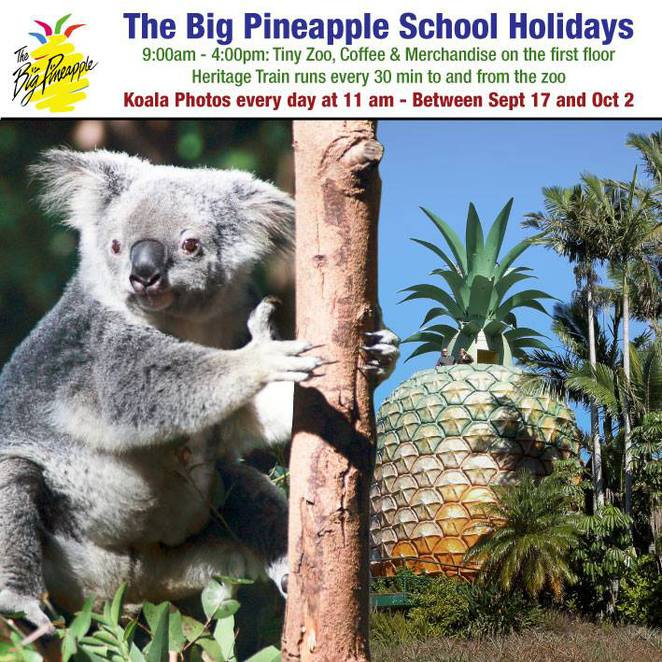Wildlife HQ, Big Pineapple, have your photo taken with a Koala in the school holidays, Heritage train running every thirty minutes, zoo, Aussie animals, Asian animals, African animals, South American animals