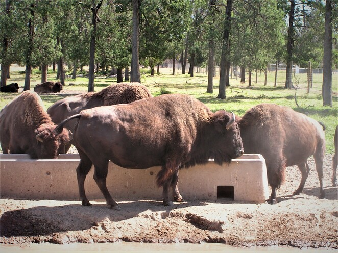 Altina wildlife park,Things to do in Darlington Point,Things to do in Griffith,Animal experience nsw,Zoos in nsw,Nsw holidays,Wildlife park nsw,Safari nsw,Animal park nsw,Zoo visit experience,