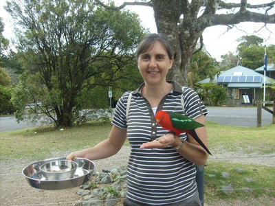 Bird feeding at O'Reilly's Lamington National Park