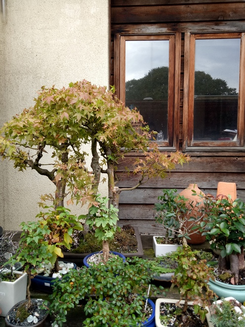 Bonsai farm, plant nursery, hawthorn
