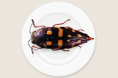 bugs, eating insects, bistro dom, museum of south australia, food sustainability
