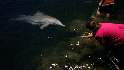Feeding the Dolphin