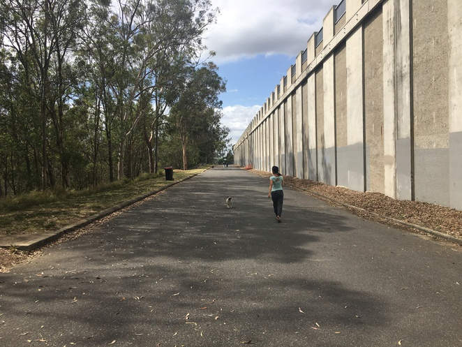 green hill reservoir, mt cootha, hiking, off leash, dog friendly, walk, nature, trees, brisbane, chapel hill, western suburbs, southern suburbs, indooroopilly, day trip, road trip, escape the city, city view, lookout