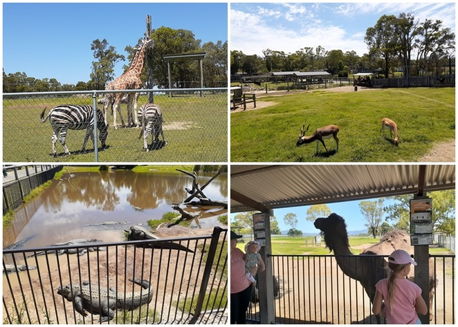 hunter valley zoo, newcastle, zoo, hunter valley, zoo, school holidays, animals, what to see, kids, children, things to do, petting zoo, monkeys, giraffes, lions, koalas, kangaroos, tourist attractions, activities,
