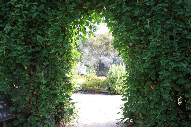 Free Guided Walks at the Adelaide Botanic Gardens for National Tree Day 2015