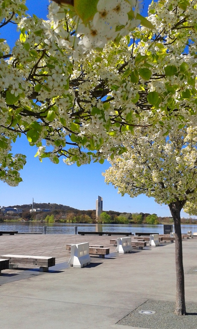 lake burley griffin, spring, canberra, ACT, floriade, ACT,