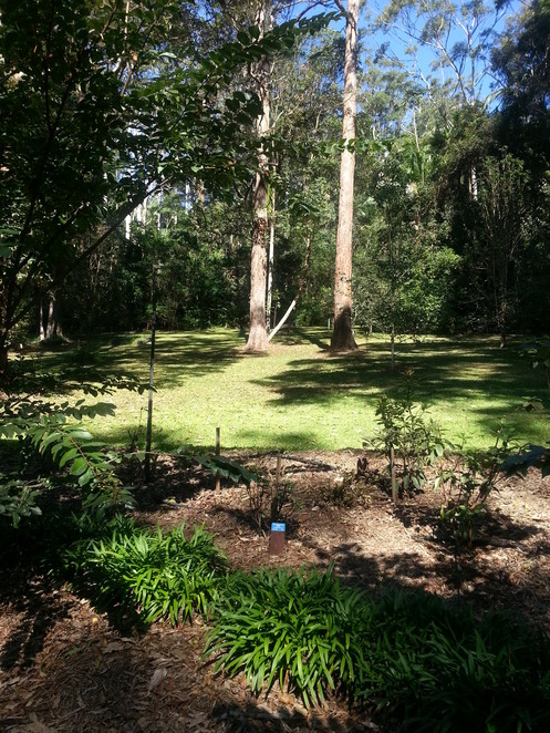 Mt Tamborine, Gold Coast, Southport, Free, Festivals, Fun Things to Do, Shopping