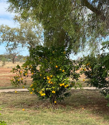 Outback, Travel, Queensland, Misc, History, Places of Interest, Fun Things to See