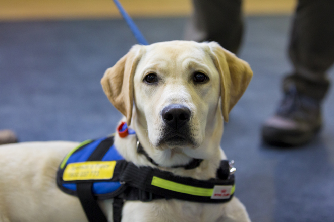 Palentine's Day Vision Australia Seeing Eye Dogs Southern Cross Station