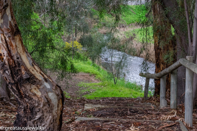river Torrens, Linear Park, dog walks, Hazel Cochrane