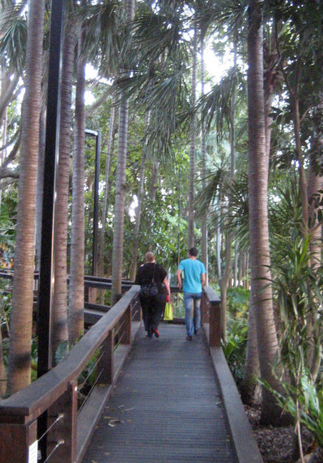 Walking through the Rain Forest at South Bank