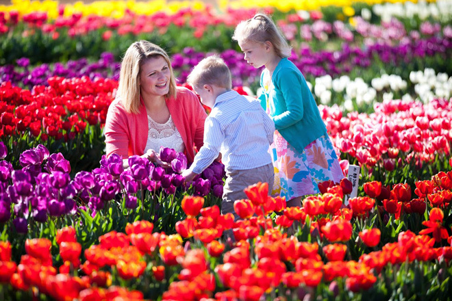Victoria Melbourne Silvan Tesselaar Flowers Flower Show Travel Get Out Of Town Escape The City Family Fun Day