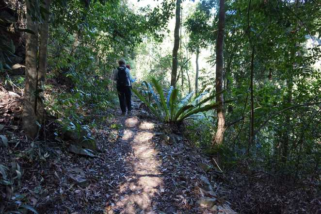Walking in forest Mount Glorious