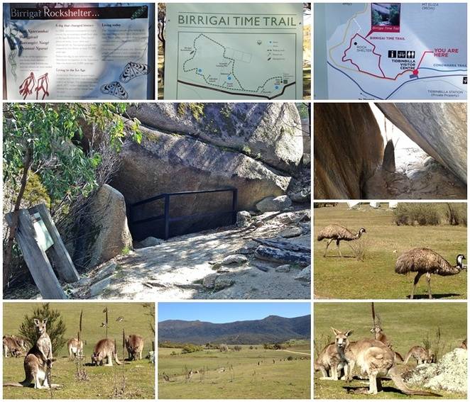 birragai time trail, canberra, tidbinbilla, canberra, ACT, bushwalks, family walks, family bushwalks,