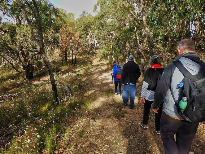 Free Guided Walks, Belair National Park, Guided Walks, Friends of Belair National Park, native, national park, free, plants, Belair