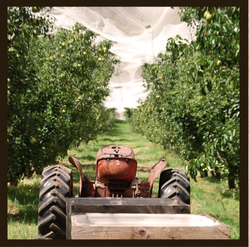Harvest, festival, farm, barn dance, coromandel, orchard, fruit, pear, apple, family, fun, April, historic cars, CFS, Hupmobile, T-Ford, Adelaide Hills, event, tractor