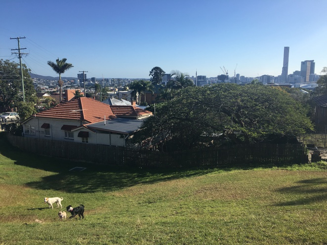 highgate hill, park, lookout, dog friendly, dog, brisbane, cbd, skyline, view, tourist, visit, nature