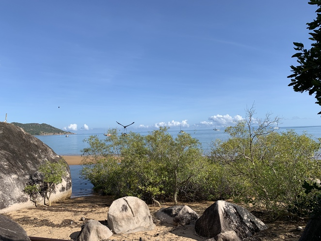 Magnetic Island, Magnetic Island National Park, Townsville, SeaLink passengers ferry, Secluded beaches, Boulders, Forest, Koala Population, Balding Bay and Radical Bay Magnetic Island, Hiking Magnetic Island, Nelly Bay, Horseshoe Bay Magnetic Island, , Horseshoe Bay enclosure for swimming.