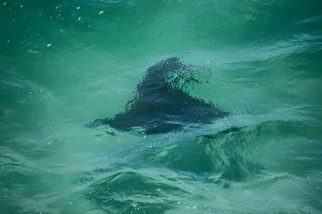 Watching an eagle ray pass the cliffs on the Gorge Walk