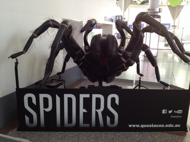 spiders, questacon, what to see in ACT, what to see in Canberra, what to do in Canberra, what to do in Sydney