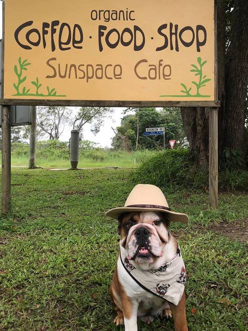 Sunshine Coast Pet Market, Saturday morning, Sunspace Cafe and Eco Shop, Eumundi-Noosa Road, Beddington Road, Doonan, organic cooking, daily seasonal specials, Little Cove Coffee Co, organic beans, eco stationery, doggy beds, Hugo's Ice Creamery, hydro-bath, soft quality towels, dogs to be leashed, only registered and vaccinated dogs permitted, friendly dogs welcome, new stallholders welcome, pawfect pampering