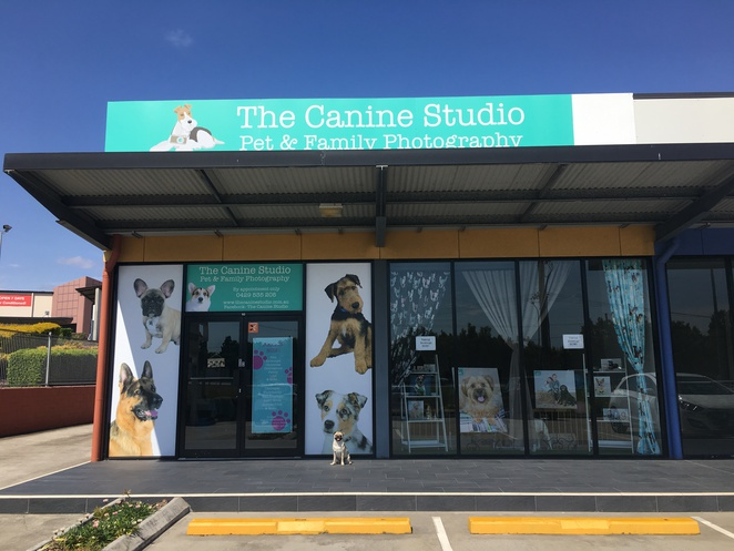 the canine studio, pet photography, family photography, brisbane, northside, northern suburbs, strathpine, dog friendly, rachel regan, photography, rachel regan photography, studio, photo shoot, queensland, guide dogs