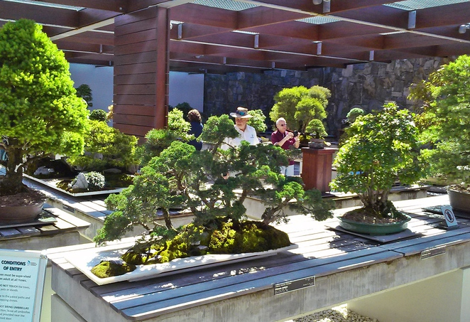 the national bonsai and penjing collection, canberra, national arboretum, ACT, tours,