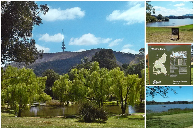 yarralumla play station, canberra, ACT, weston park, parks, mini golf, mini train rides, toddlers, playgrounds, BBQ areas, walks, bike rides, yarralumla gallery, oaks brasserie, cafes, yarralumla plant nursery, weston park playground
