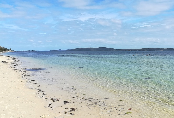 bagnalls beach, nelson bay, NSW, port stephens, dog walking beaches, best beaches in port stephens, dog friendly, places to take dogs, corlette, nelson bay, bagnalls, dogs, dog walking, beaches, seagrass, swans, signs, seagrass meadow,