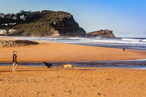 Central Coast,Avoca ,dog friendly,child friendly,beach