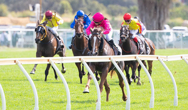 melbourne cup, racing, food, fashion luncheon, drinks, betting, horses