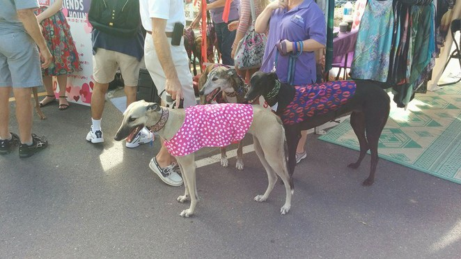 dogs davies park market greyhound friendly