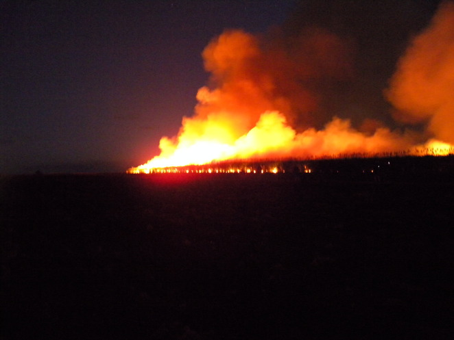 Fire racing through a cane field at Childers
