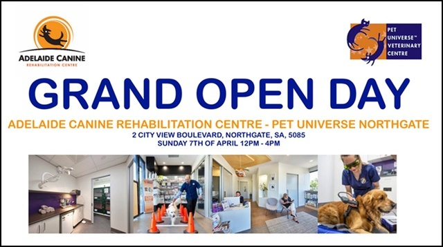 Open,day,at,vet