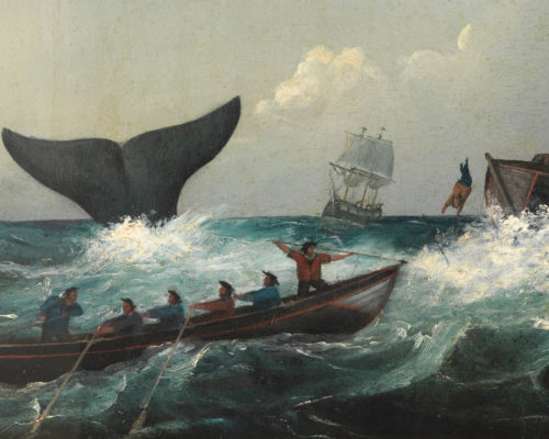 shipwrecked...again, shipwrecked, leviathan, whales, maritime, museum, membership, waves, sea monsters, tours, school holidays