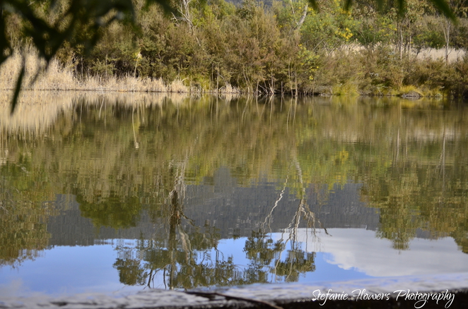Tidbinbilla, nature, wetlands, reflection