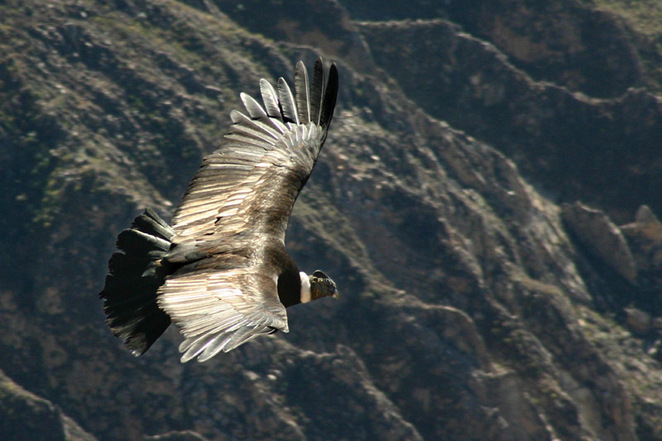 bird tours in the Andes