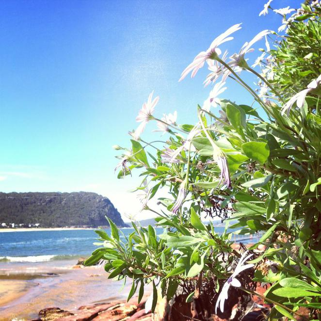 flowers, sun, sand, summer, beach, sea, rocks, rockpool, pearl beach, central coast, relax