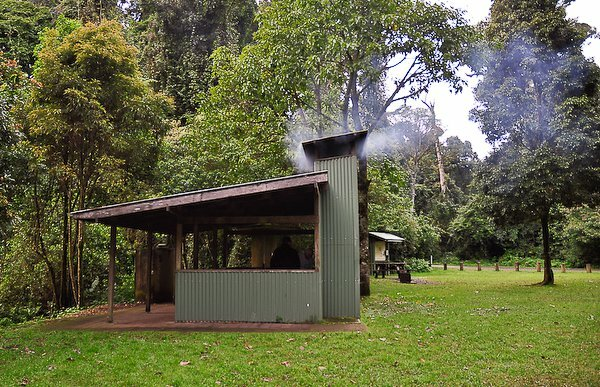 Forest Tops Campground in the Border Ranges National Park