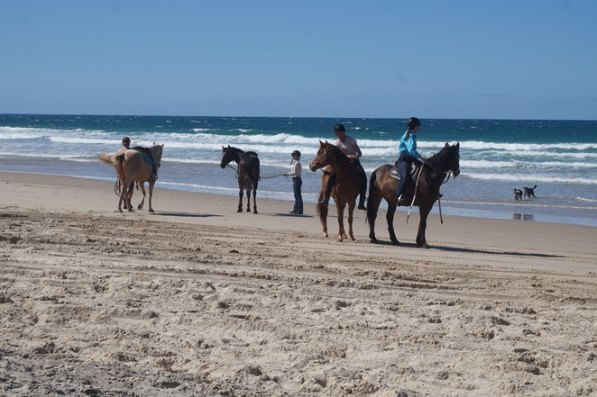 Horses and dogs on beach