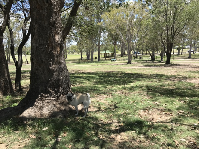 kianawah park, tingalpa, park, dog park, dog friendly, picnic, playground, bears district cricket, cricket, wynnum, brisbane, eastern suburbs, southside, southern suburbs, barbecue