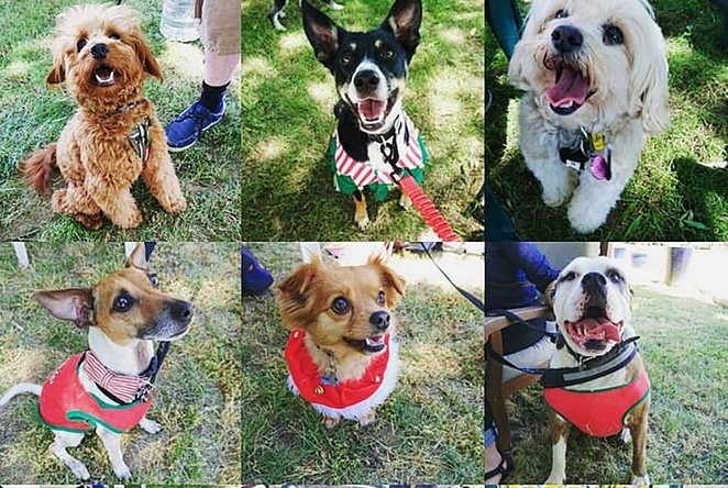 mollie and tanins christmas party, events, murrumbateman winery, ACT, NSW, canberra wine district, dog events, canberra, christmas, 2017,