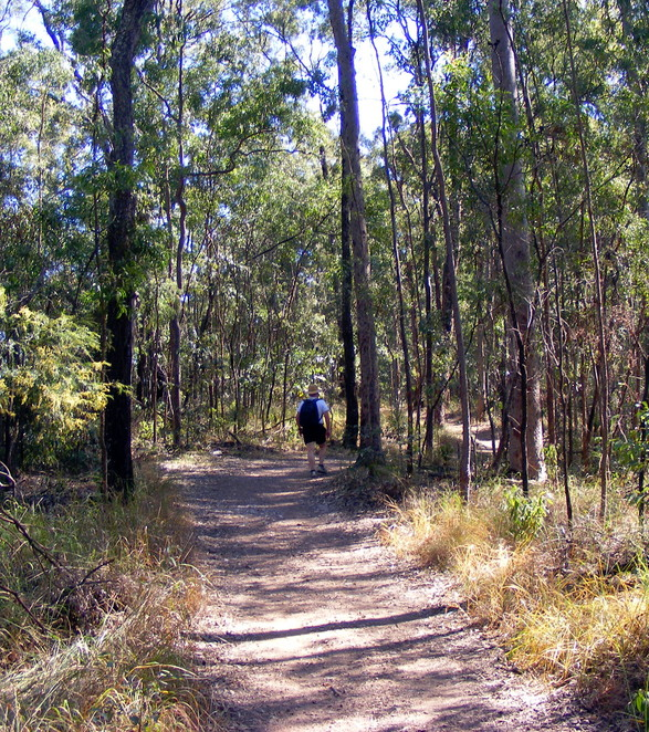 New trails at Mt Coot-tha link several tracks together into a super summit circuit