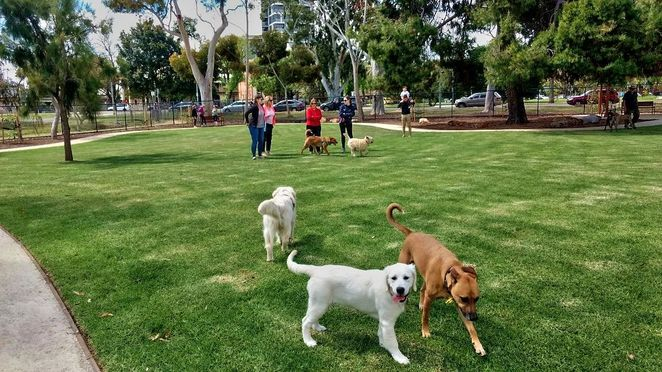 Pityarilla Dog Park, dog park, adelaide, pityarilla, marshmallow park, adelaide, glen osmond road, dog parks, play area, large dogs